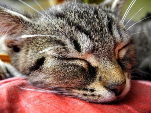 cat kitten head