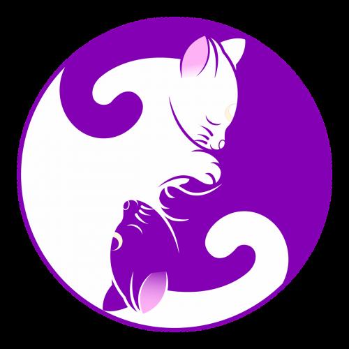 cat yin yang kitten