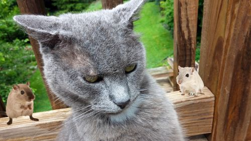 cat mice funny