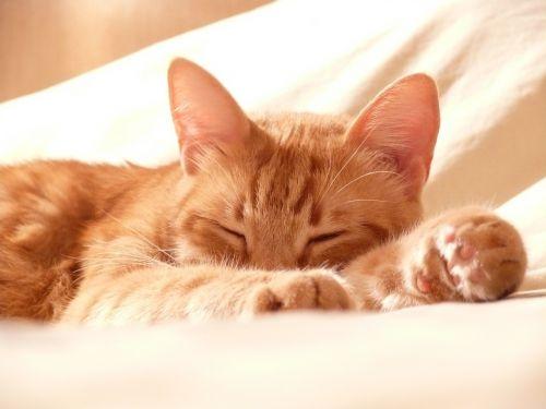 cat paw roux