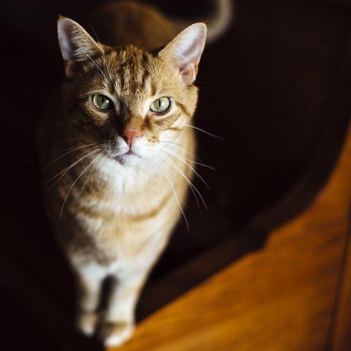cat animal love