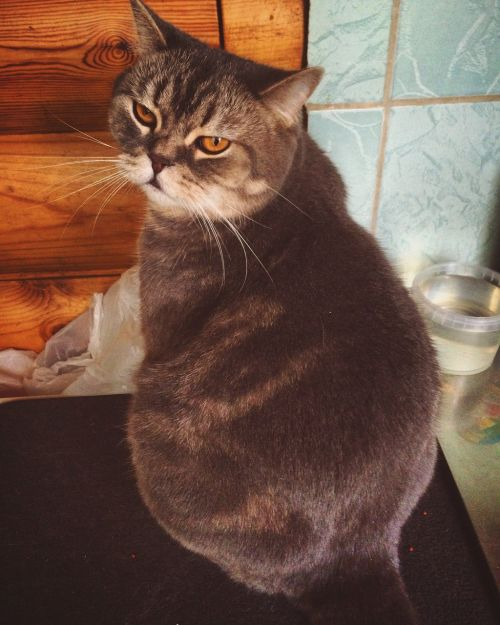 cat thick fat cat
