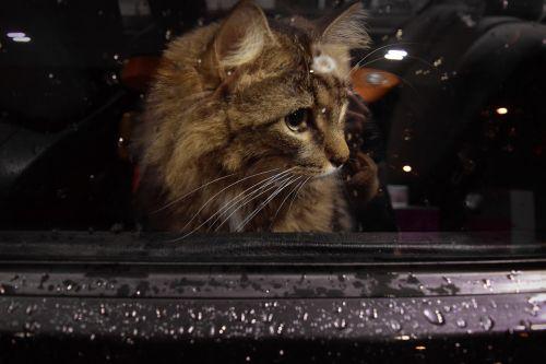 cat window car