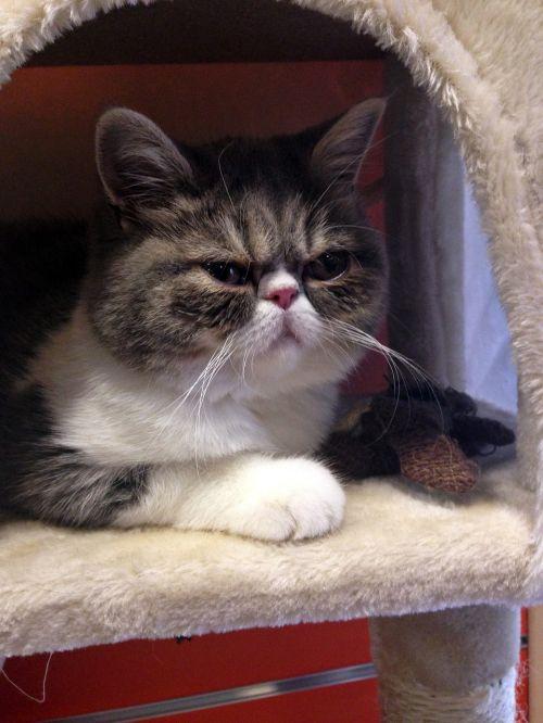 cat grumpy upset