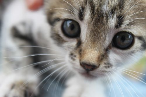 cat kitty istanbul