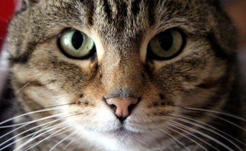 cat face eyes