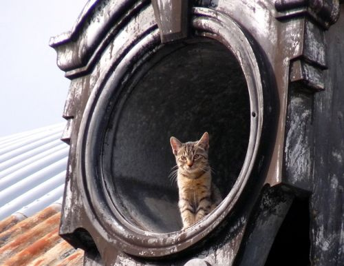 cat roof home