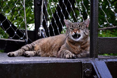 cat fur purr