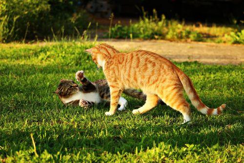 cat mieze kitten