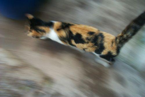katė,greitis,kačių