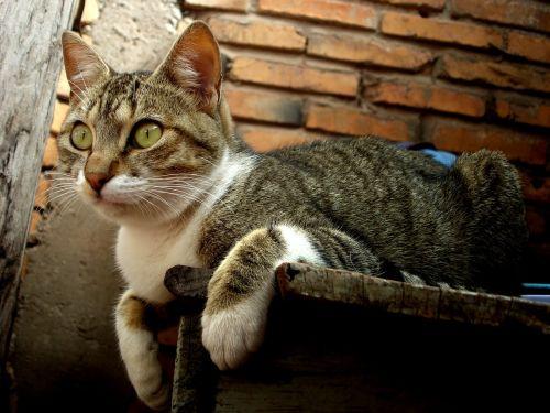 cat feline brick