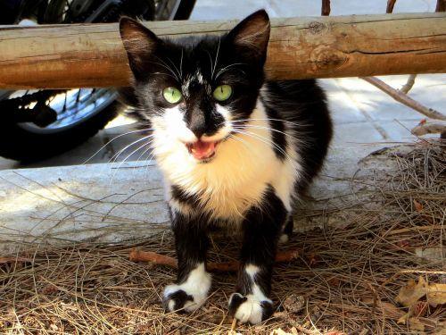 cat kitten young cat