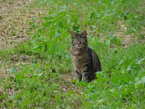 cat lurking meadow