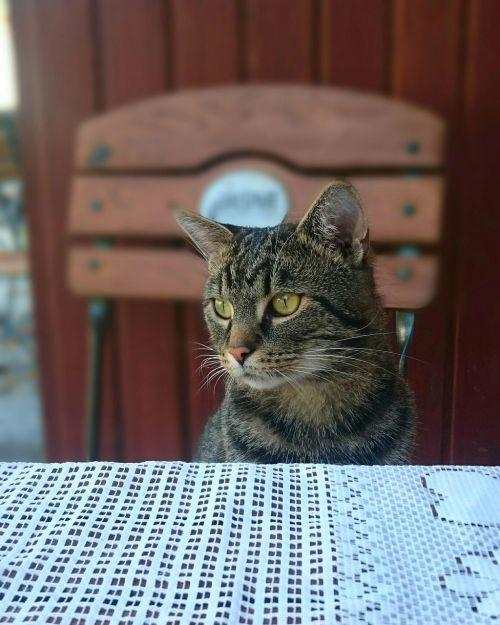 cat favorite kitten