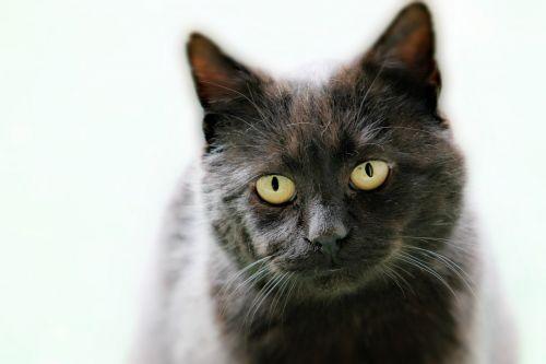 cat pets watch