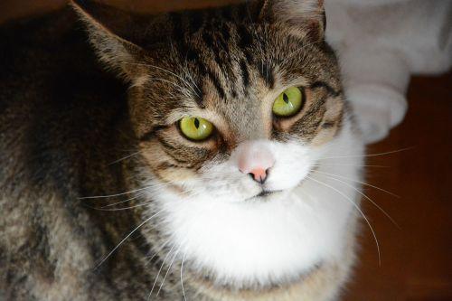 cat kitten pet