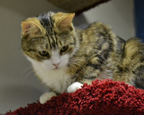 cat furry beautiful cat