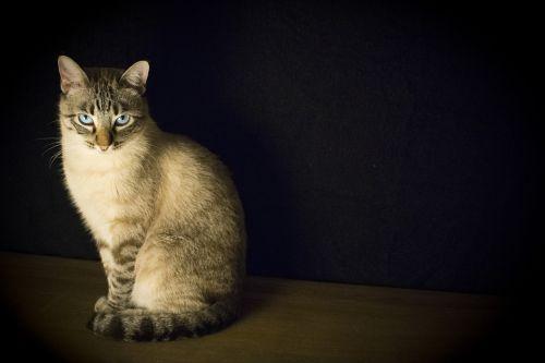 cat pet look