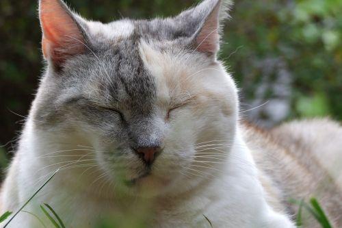 cat tricolor pet