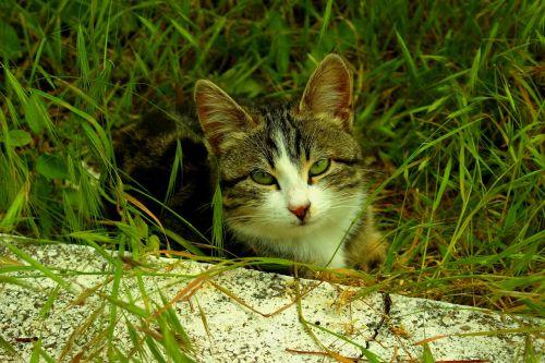 cat green eyed innocent
