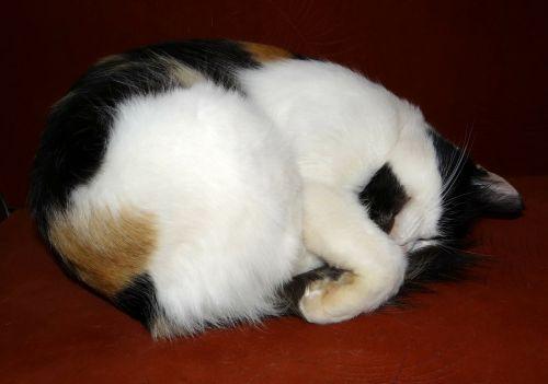 cat cute cat deep sleep