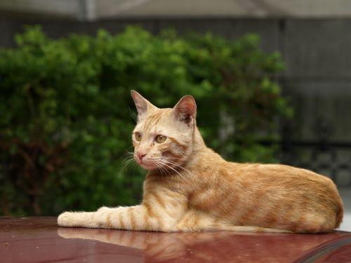 cat roof rest