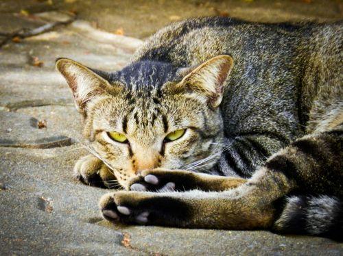 cat feline homeless