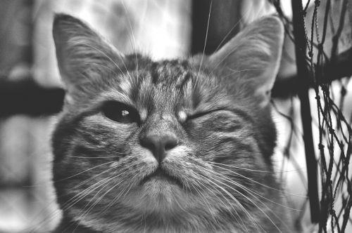 cat wink funny
