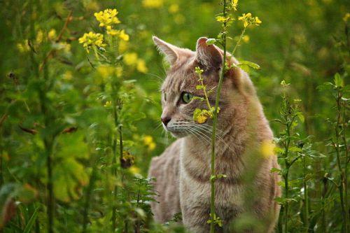 cat kitten mieze