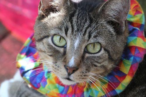 cat feline henry