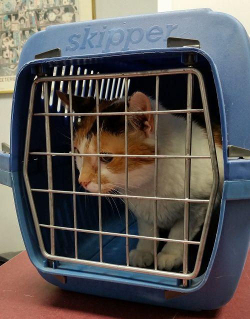 cat carrier animal