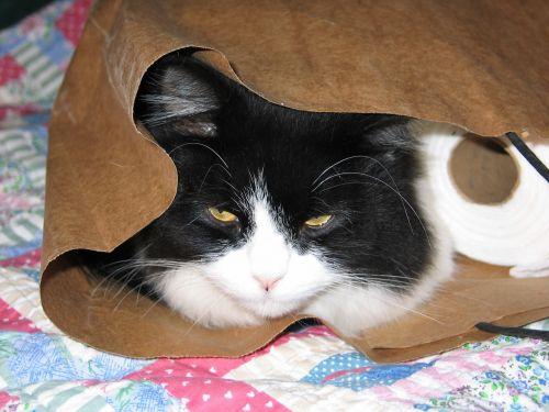 cat bag fun