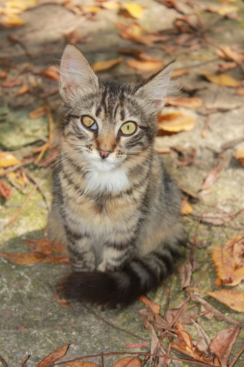 cat,backyard,tabby,squint,eye,ill,pet,without house