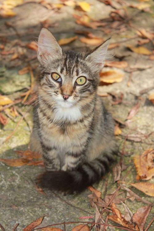 cat backyard tabby