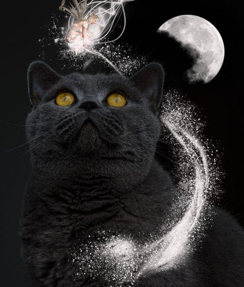 cat magic fantasy