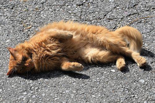 cat sun concerns