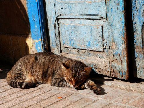 cat sleeping outdoors