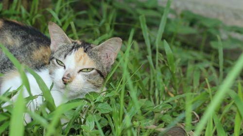 cat paws pet