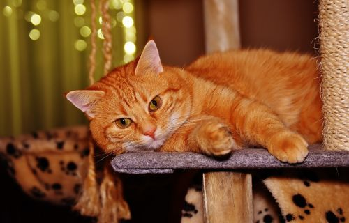 cat red funny