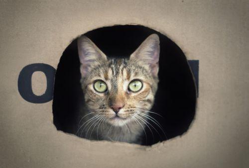 cat box feline