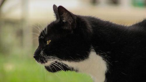 cat hunting alert