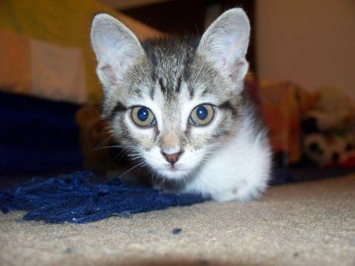 cat cute cat cat face