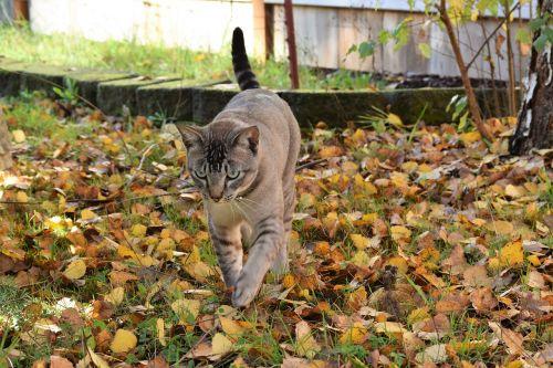 cat fall leaves