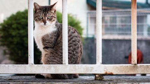 cat prison animal