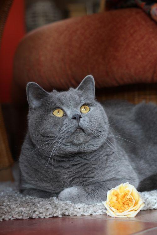 cat domestic cat pet