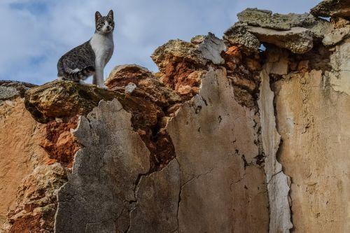 cat feral wall
