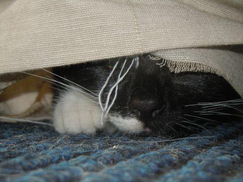 cat hidden lurking