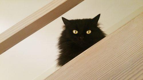cat black friday