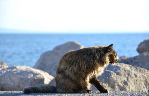 cat,strays,tortoise shell,sea,sun,rock