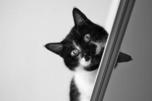 cat gatta inside